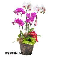 中秋节鲜花,金玉满堂
