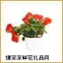 鲜花盆栽,海棠