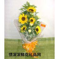 太阳菊,丝语阳光