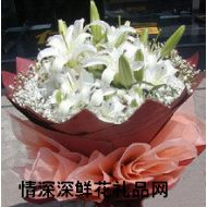 百合花,幽兰香