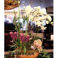 酒店插花,蝴蝶兰盆花