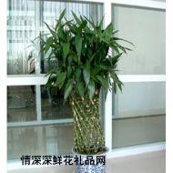 绿叶植物,富贵竹笼