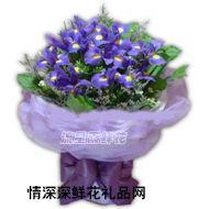 元旦鲜花,紫色的梦