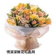 香港鲜花,明媚