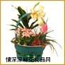 鲜花盆栽,花组合