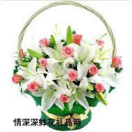 精品鲜花,爱的祝福