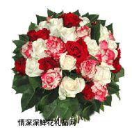 英国,彩色玫瑰