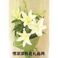 百合花,园丁颂