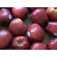 水果品种,红蛇果
