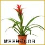 鲜花盆栽,凤梨