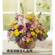 亲情鲜花,暧意