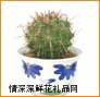 绿植盆栽,长刺巨鹫玉