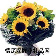 向日葵,你是我的太阳