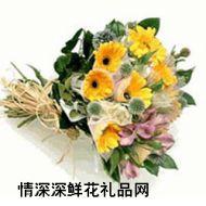 太阳菊,母爱颂